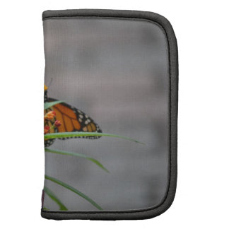 butterfly bush monarch behind . folio planners