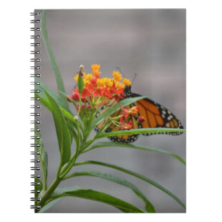 butterfly bush monarch behind . note book