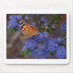 Butterfly-butterflies-insects.jpg Tapetes De Raton