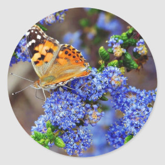 Butterfly Butterflies Insects Round Stickers