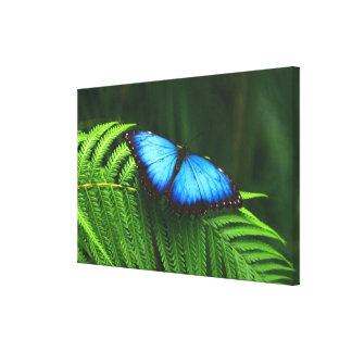 butterfly stretched canvas print