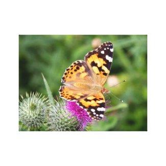 Butterfly canvas print wrappedcanvas