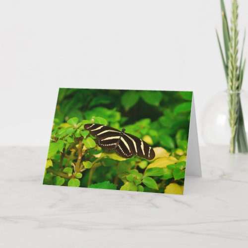 Butterfly Card card