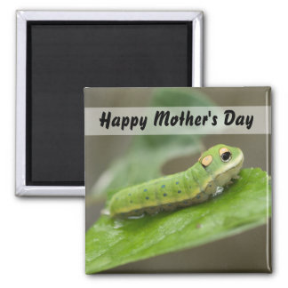 Butterfly Caterpillar Larva 2 Inch Square Magnet