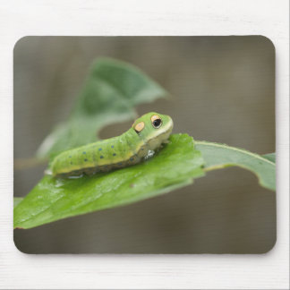 Butterfly Caterpillar Larva Mouse Pad