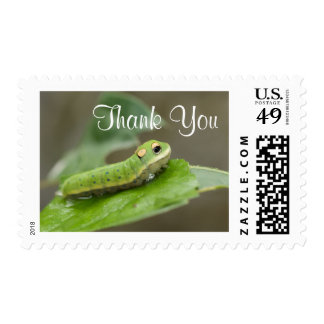 Butterfly Caterpillar Larva Postage Stamps