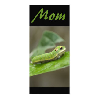 Butterfly Caterpillar Larva Rack Cards