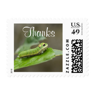 Butterfly Caterpillar Larva Stamps