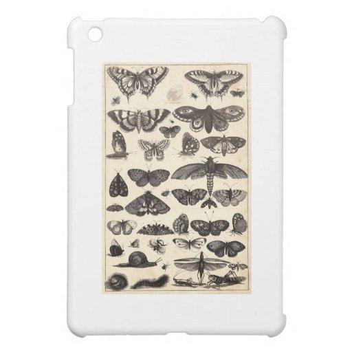 butterfly-clip-art-17