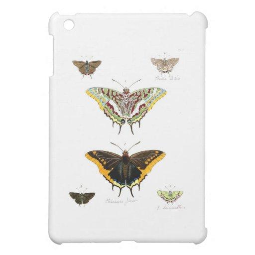 butterfly-clip-art-21