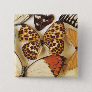 Butterfly collection button