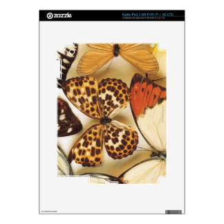 Butterfly collection iPad 3 decal