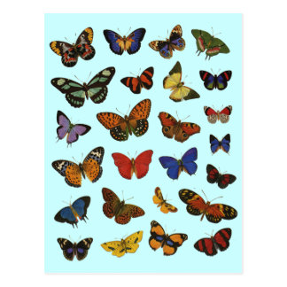 Butterfly Collection Postcards