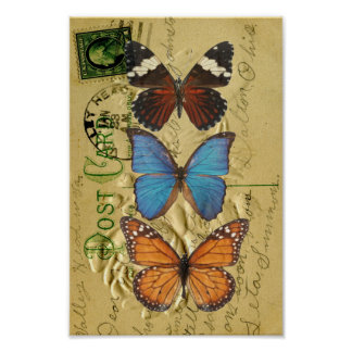 Butterfly collection poster