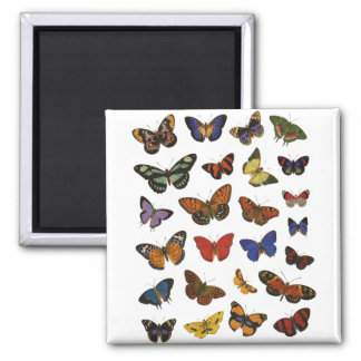 Butterfly Collection Refrigerator Magnet
