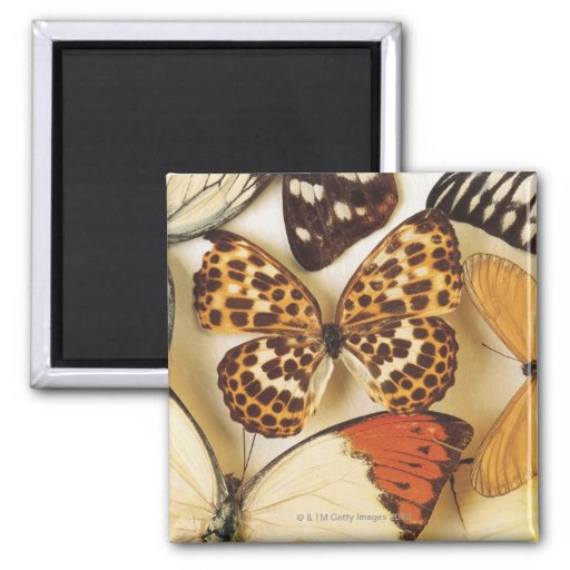 Butterfly collection refrigerator magnets