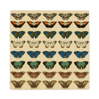 Butterfly Collection Wood Coaster