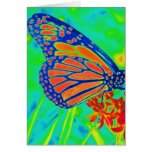 Butterfly colorized pretty photograph graphic cards