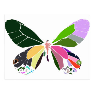 butterfly colors postcard