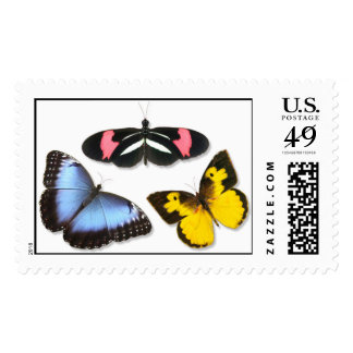 Butterfly Combo Postage Stamps