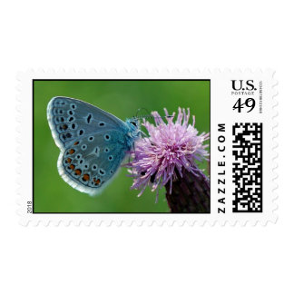Butterfly Common Blue on thistle postage