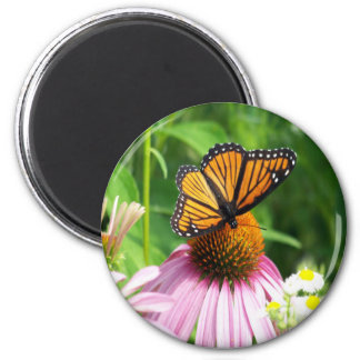 Butterfly  Cone Flower Magnet