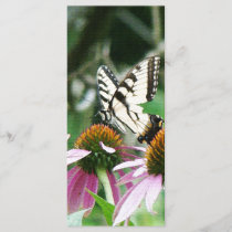 Butterfly Coneflowers Flowers Floral Wildlife