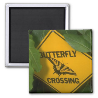 Butterfly Crossing 2 Inch Square Magnet