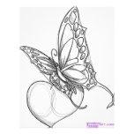 Butterfly Custom Flyer