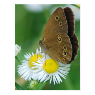 butterfly&daisies postcard
