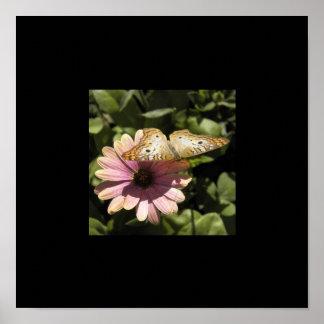 Butterfly & Daisy Black Border Poster