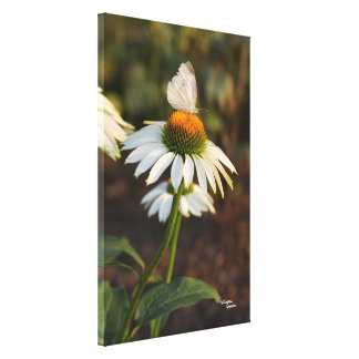 Butterfly daisy Stretched Canvas Print