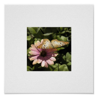 Butterfly & Daisy White Border Poster
