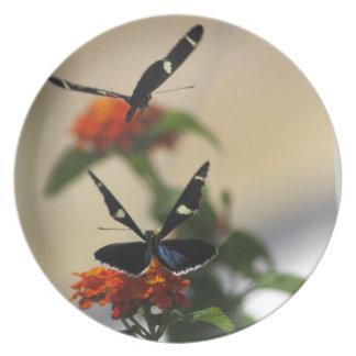 Butterfly Dance 3 Plate