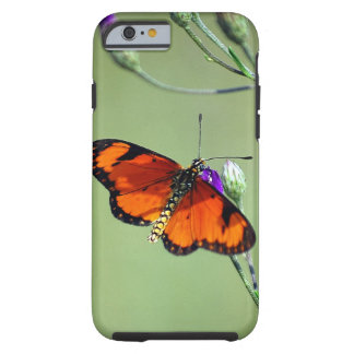 Butterfly delight tough iPhone 6 case
