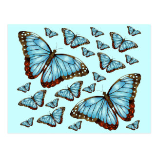 Butterfly Delight Postcard