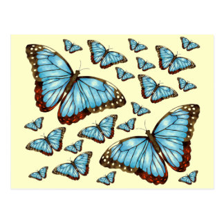 Butterfly Delight Postcard