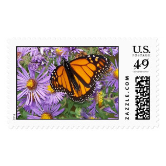 Butterfly Dines Stamp