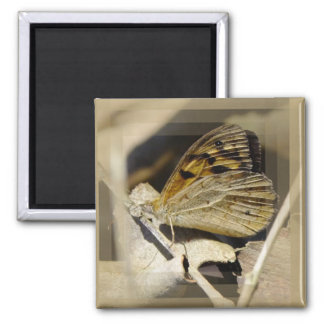 Butterfly Dreaming 2 Inch Square Magnet