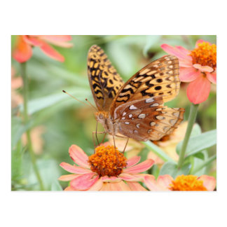 Butterfly Drinking Nectar Postcard
