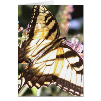 Butterfly - Eastern Tiger Swallowtail  Card