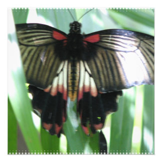 Butterfly Farm Invitations
