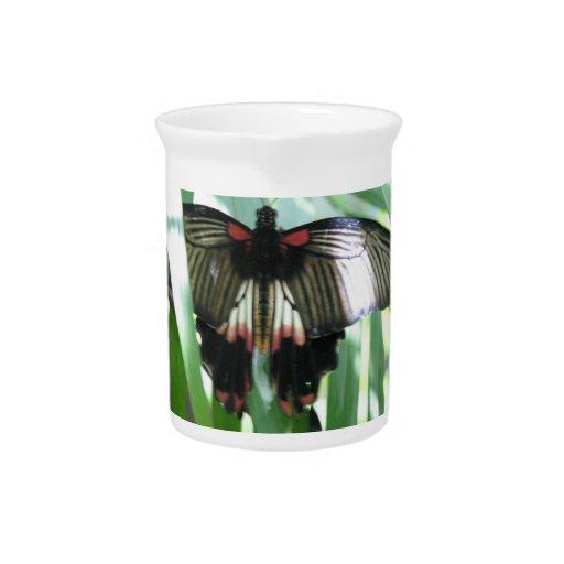 Butterfly Farm Pitcher