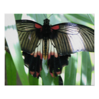 Butterfly Farm Poster