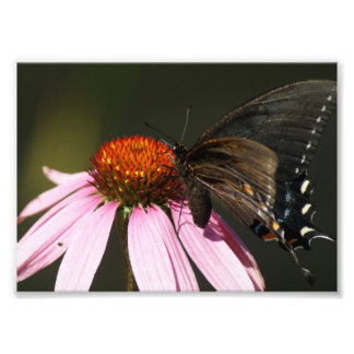 Butterfly Feasting 7 x 5 Photographic Print