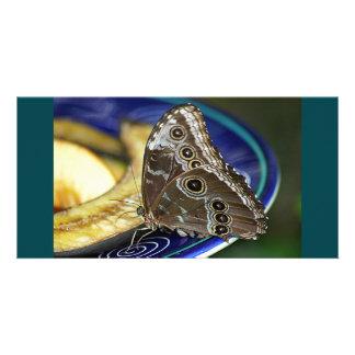 Butterfly feeding on Bananas Photo Card