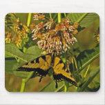 Butterfly Feeding on Flower Mousepad