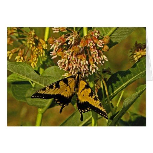 Butterfly Feeding on Flower Note Card