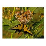 Butterfly Feeding on Flower Postcard