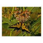 Butterfly Feeding on Flower Poster